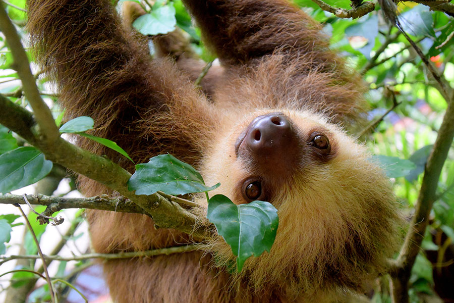 best gifts for people who love sloths