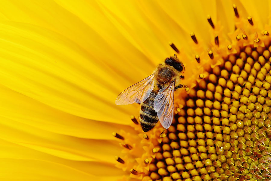 best gifts for people who love bees